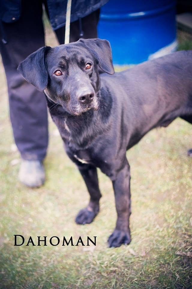 Dahoman